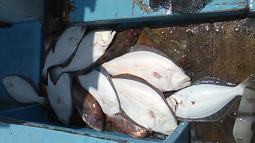 2019年6月1日の釣果 日間賀島の釣り船 松盛丸